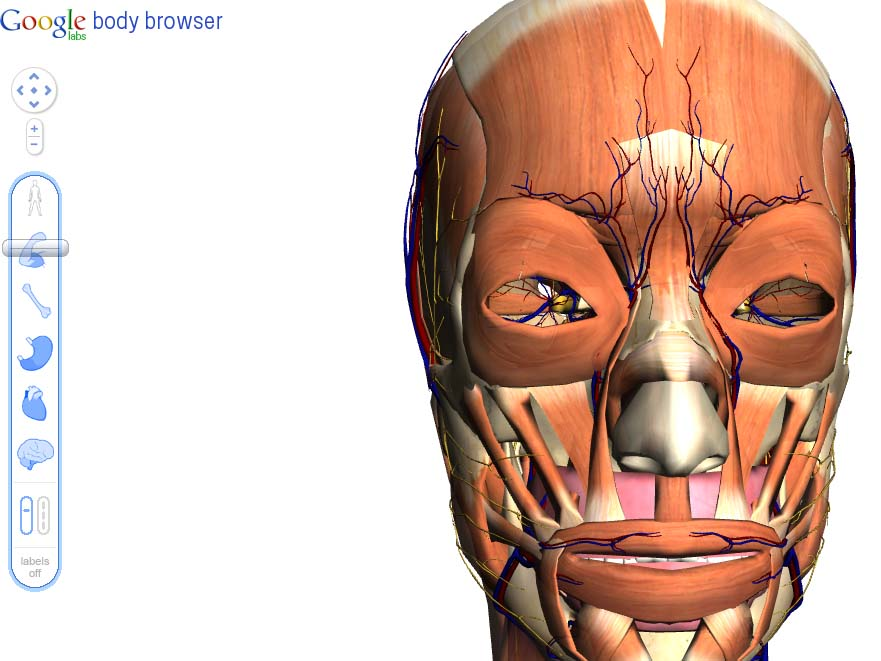 Search The Human Body With Google Body Browser Cozy Digital